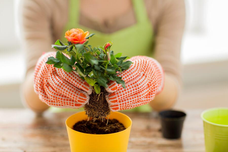 puutarhanhoito-vaaraksi-raskauden-aikana